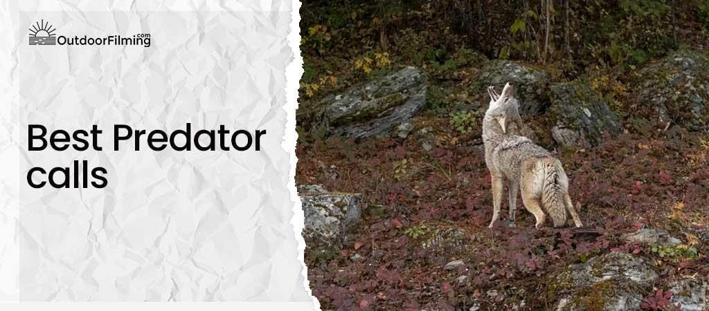 Best Predator calls